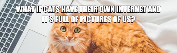 Memes für die Katz